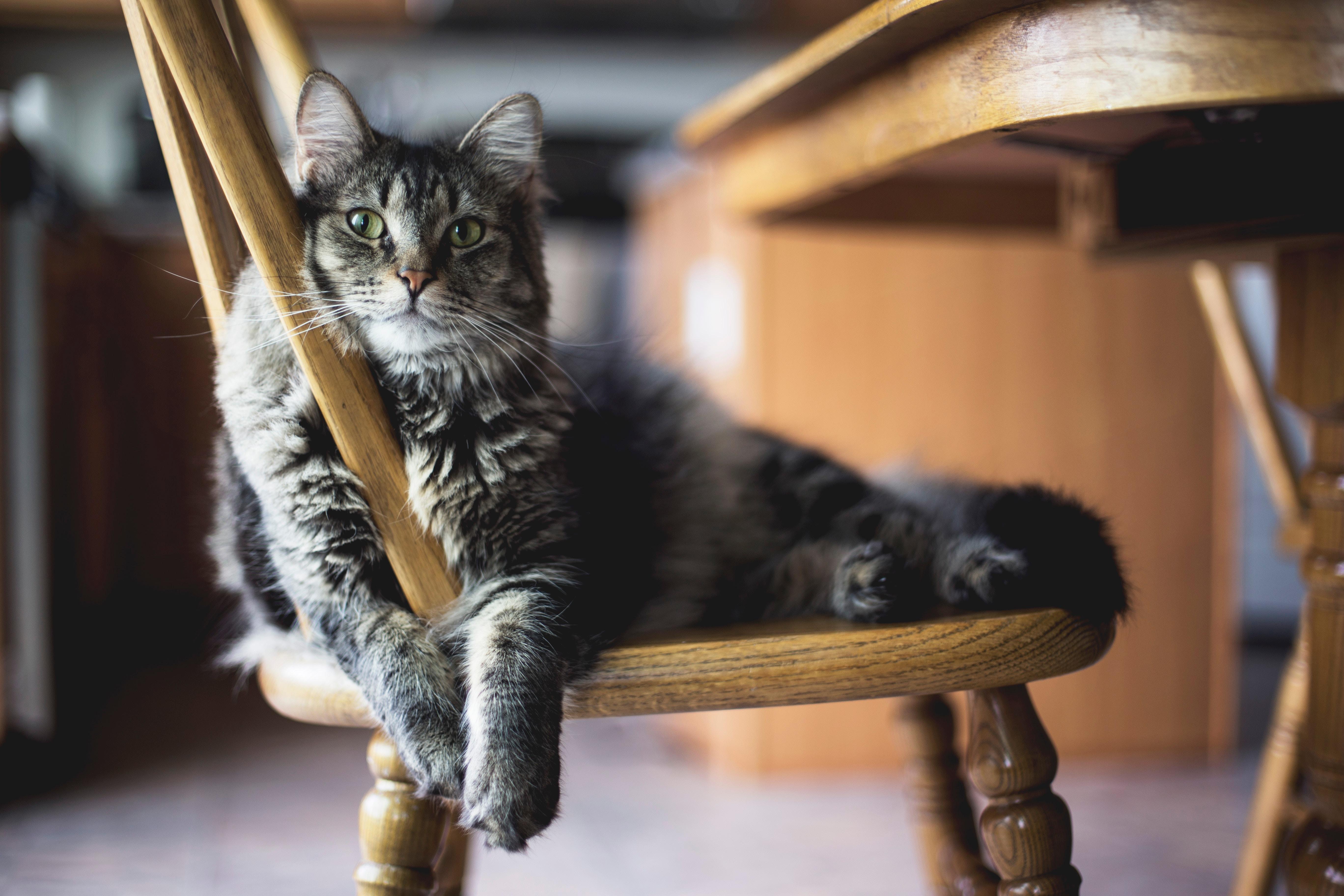 jedzenie dla kota animalia