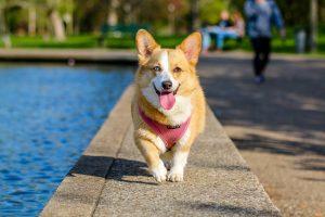 preparaty dla zdrowia psów