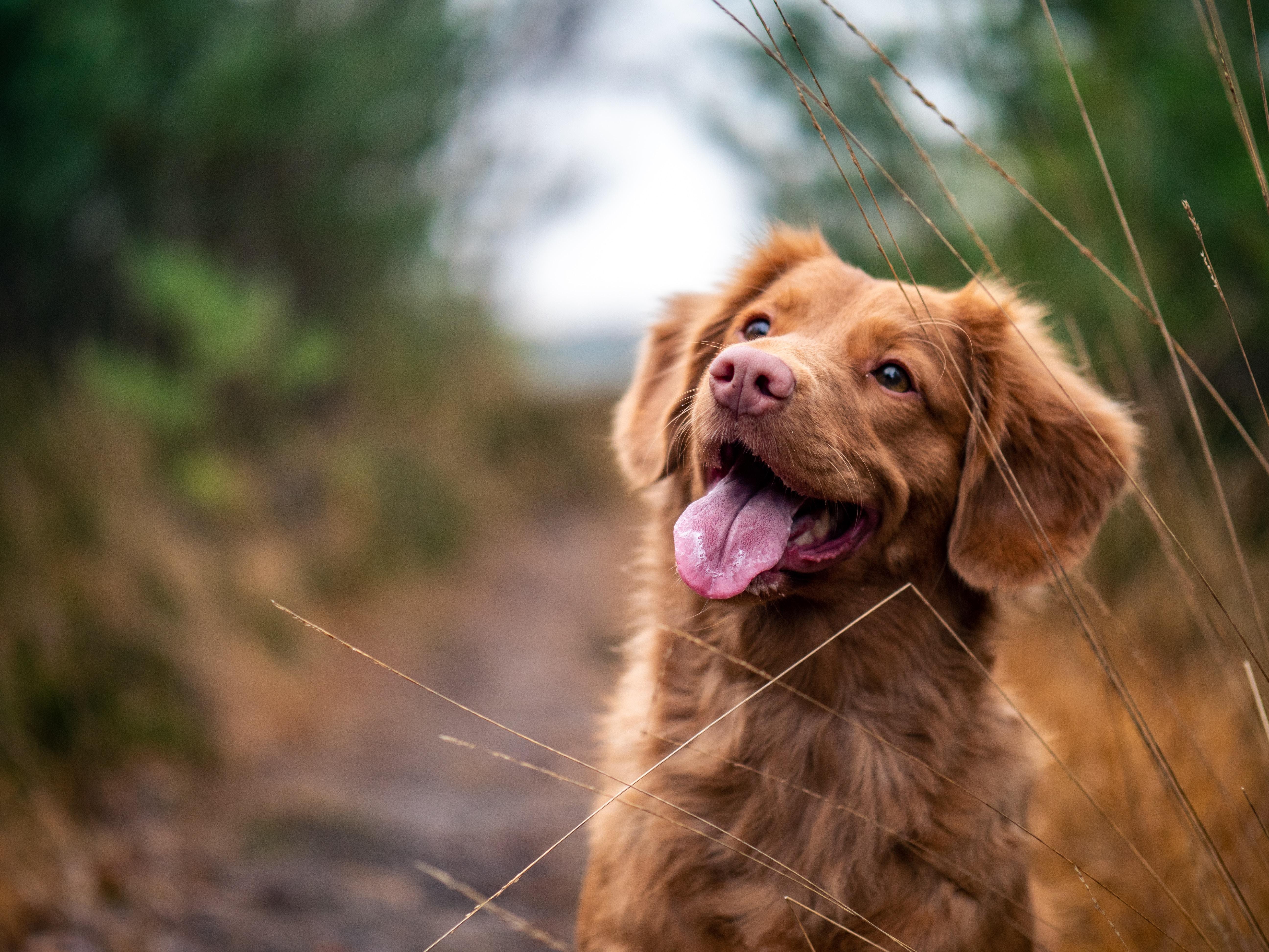 gadżety dla miłośników psów