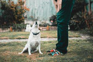 karmy specjalistyczne dla psów