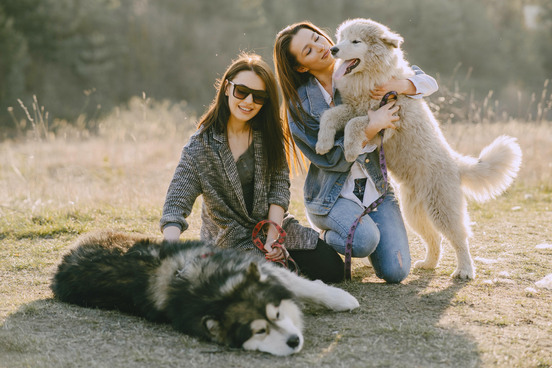 blog o zwierzętach