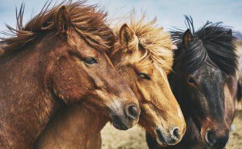 ciekawostki o koniach i jeździectwie