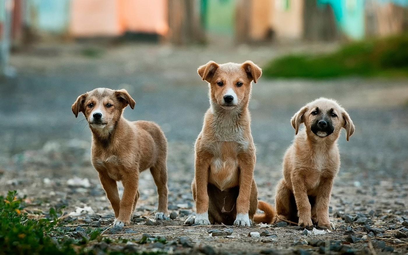 Pies ze schroniska jak postępować