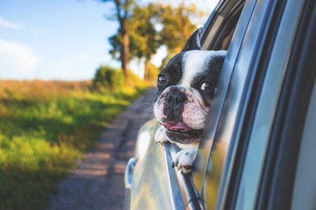 transportery dla psa