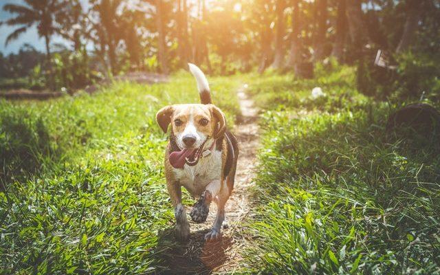 jak pielegnować opuszki psa