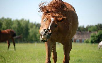 pasze dla koni pro linen kiedy wybrać