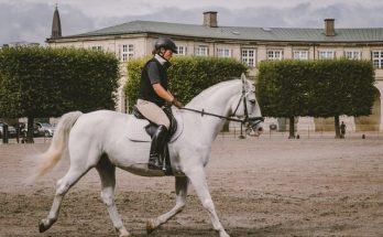 kamizelki na konie - warto je kupić, by dobrze się ochronić