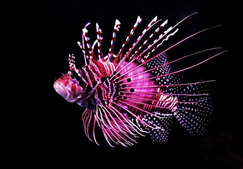 ciekawostki o rybach