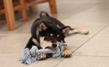 odpowiedzialność za szkody wyrządzone przez zwierzęta domowe